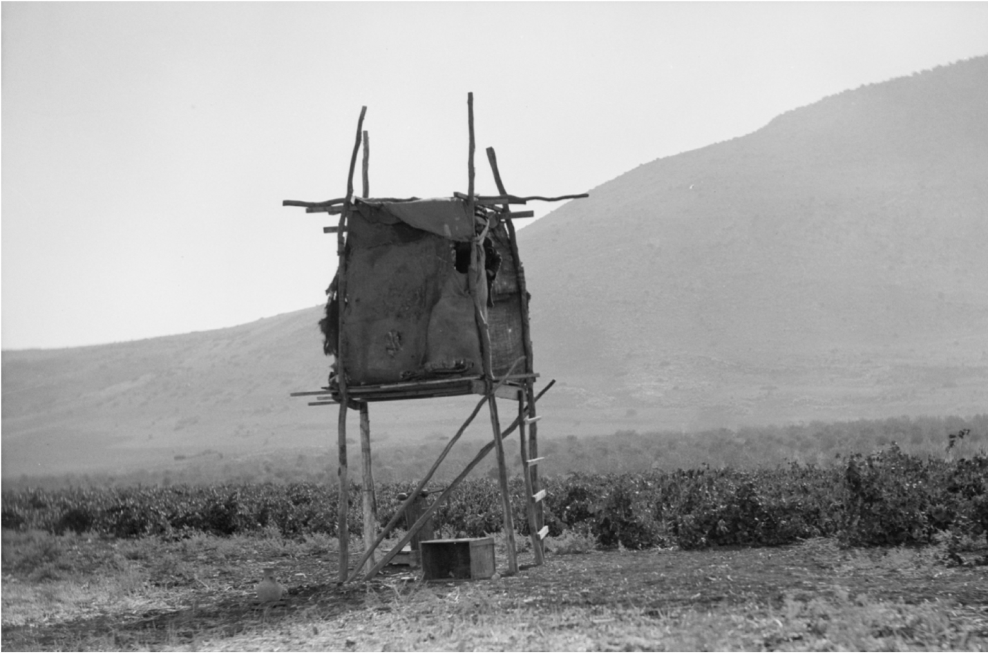 A sukkah in a vineyard at the foot of Mt. Tabor, ca. 1920–1933 (Matson Collection)