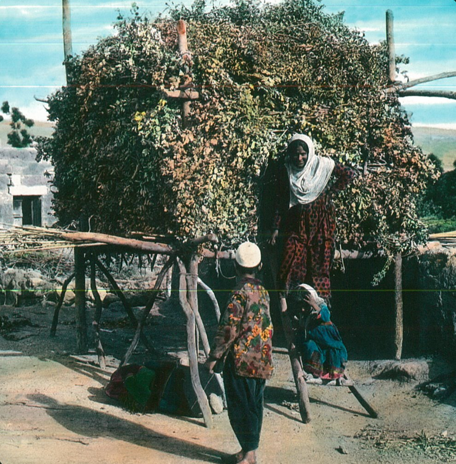 """A sukkah with """"leafy branches"""" near Banias, ca. 1900–1920 (Eretz Israel Museum)"""